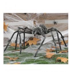 Araignée Velue Géante