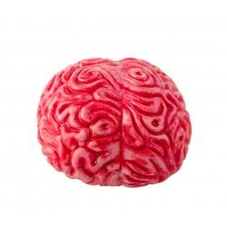 Cerveau Réaliste en Latex