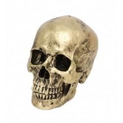 Crâne en Résine Aspect...
