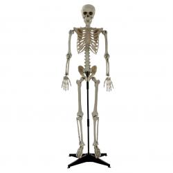 Squelette Articulé Sur Pied...