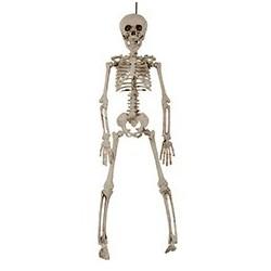 Squelette 3D articulé  40cm