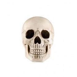 Crâne en Résine 19cm