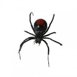 Araignée Veuve Noire