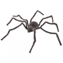 Araignée Géante
